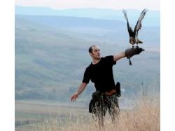 Handling birds of prey lesson in Sibiu