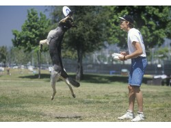 Dog training lesson in Bucharest
