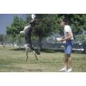 Dog training lesson in Bucharest