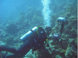 Scuba diving – Introductory course for 2 in Baia Mare
