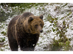 Bear Watching – Family Short Break in Brasov / Bran