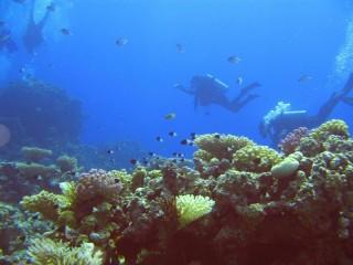 Scuba diving lesson  in Bucharest