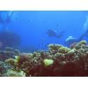 Scuba diving lesson  in Baia Mare